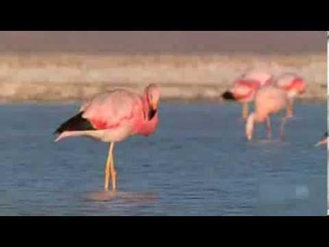 Pink Flamingos Dancing to Michael Jackson