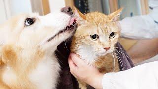 목욕하던 고양이가 울자 걱정된 강아지가 보인 놀라운 행동
