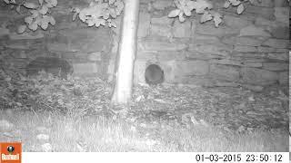 Hedgehog Street: Tight squeeze