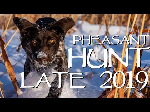 South Dakota Pheasant Hunting In The Snow
