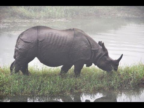 Chitwan Jungle Adventure