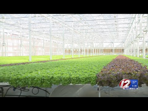 High-tech Greenhouse Opens In Converted GE Factory