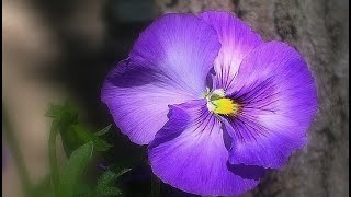 Виолетова фантазия/ Violet fantasy