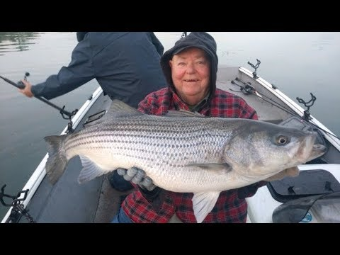 Striper & Hybrid Bass Fishing In Tennessee - How To Catch Trophy Stripers