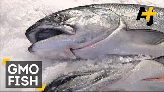 GMO Fish Approved By FDA