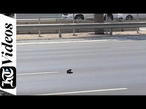 When Dubai Police