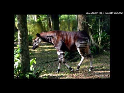 Ituri : la Réserve de faune à Okapi dénonce l'exploitation illégale de l'or dans cet espace 28/0