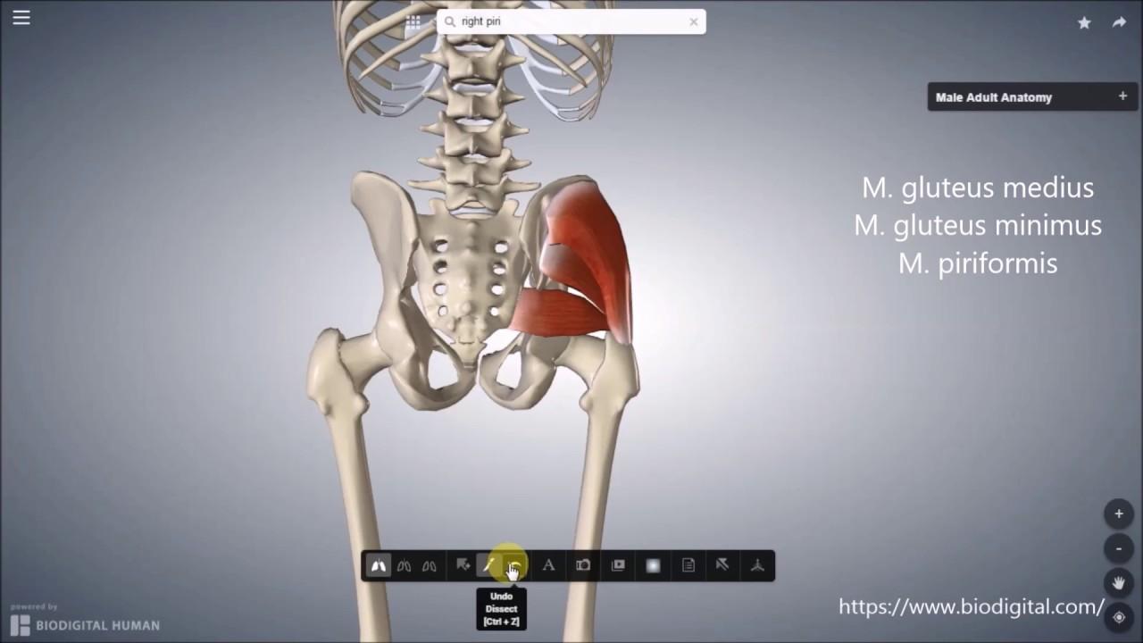 Oberschenkel-Femur - YouTube