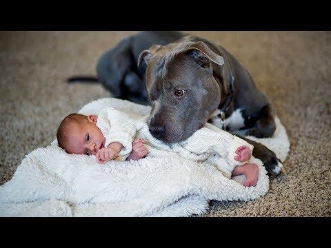 عندما ولد هذا الطفل قرر الزوجين التخلي عن كلبهم ولاكن بعد أيام أنقذ الأسرة بأكملها