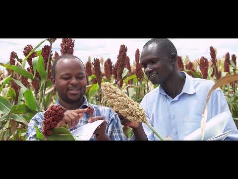 Africa Food Prize 2021 Laureate - ICRISAT
