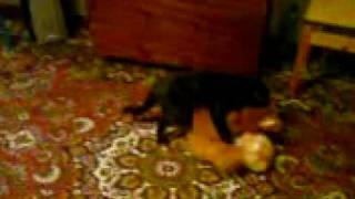 Кот трахает игрушки