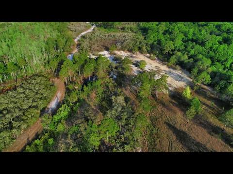 Lake Marion Creek Wildlife Management Area