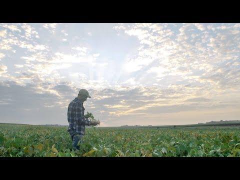 Performance Profiles: The Joy of Farming