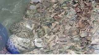 Publication Date: 2018-11-04 | Video Title: 心靈雞湯 - 樂善堂劉德學校_2018嘉道理農場戶外學習活動