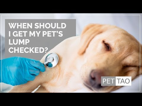 When Should I Get a Lump on My Pet Checked Out? -PET | TAO Holistic Pet Products