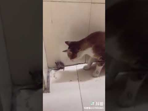 Cat Series: When a mouse is not afraid of cat