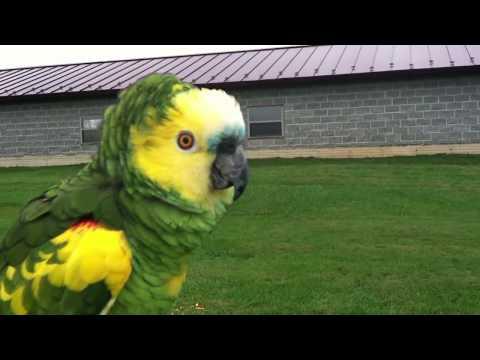 Storm Telling Comet No | Camelot Macaw & Amazon Parrot