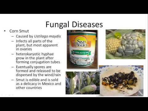 Fungal and Protistan Diseases of plants