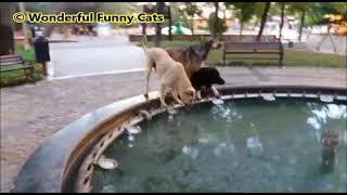 Interesting behavior of animals │Funny reactions of dogs
