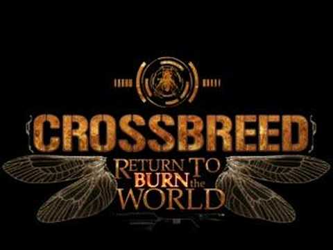 Crossbreed - Release me