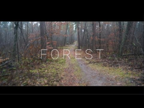 Forest Exploring | Cinematic Nature