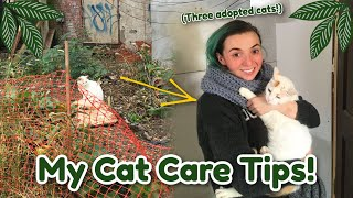 My Cat Care Tips! (With Three Adopted Feral Cats!)
