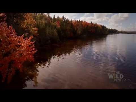 Horseshoe Lake - The Wild Center