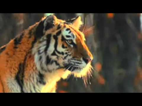 discovery channel hindi mai live