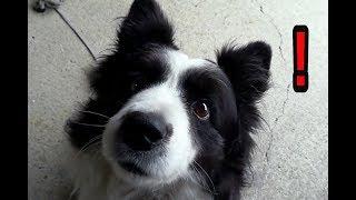 我が家の愛犬ハリーくんはいつも朝に私と「取って来いごっこ」や「闘い...
