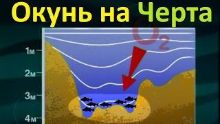 Диалоги о рыбалке  118  Глухозимье ловля окуня на черта
