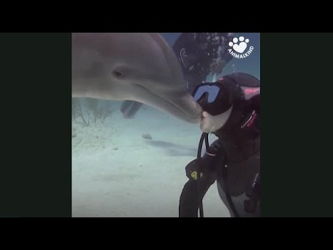 Dolphin puts smooth moves on divers