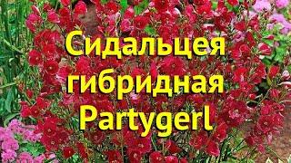 Сидальцея гибридная Партугерл. Краткий обзор, описание sidalcea malviflora-hybr. Partygerl