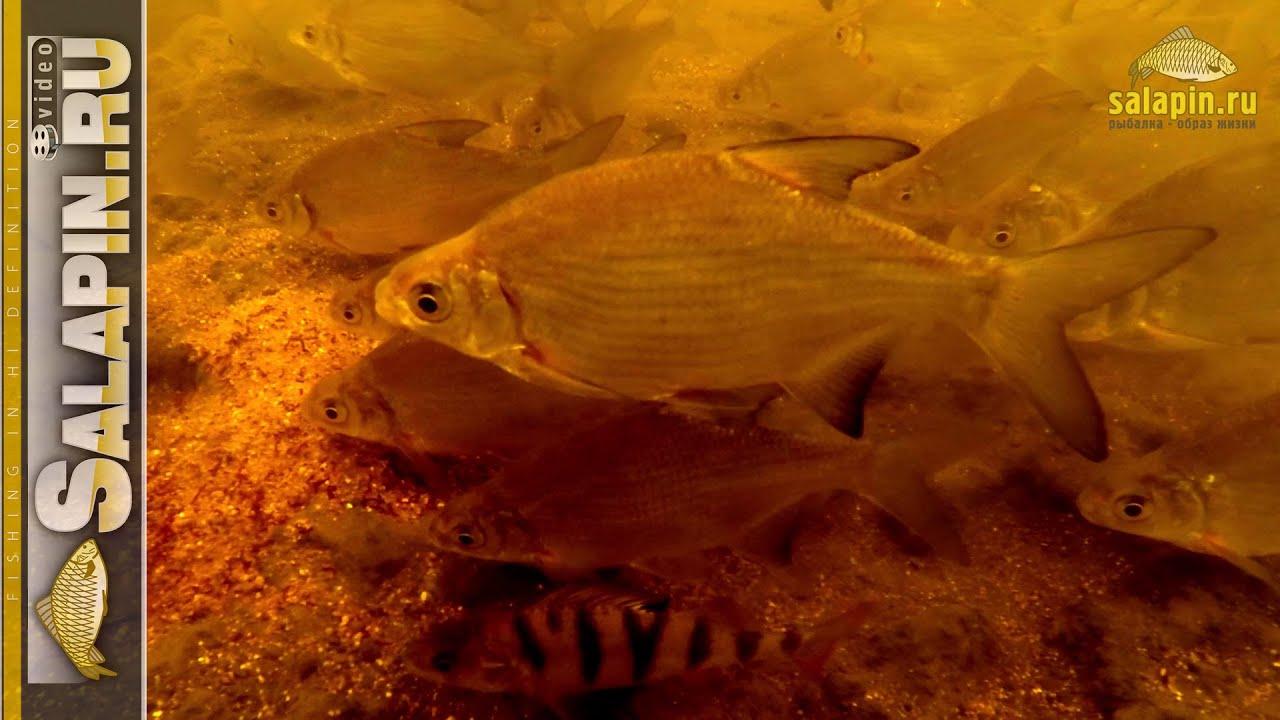 Как работает отводной поводок на течении (подводное видео) [salapinru]