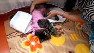 Злая кошка после наркоза.MP4