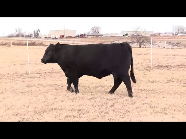 Missouri Angus Futurity Lot 76