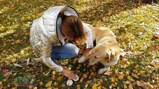 Bio zeliščna krema za pasje tačke Suki