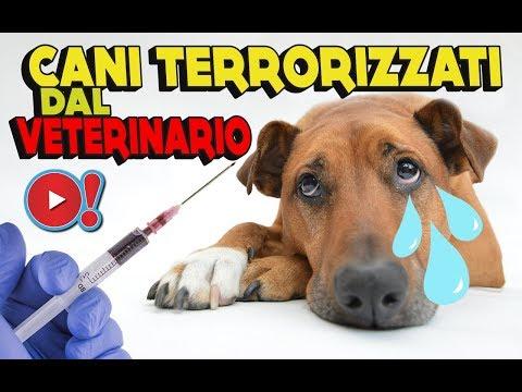 CANI DIVERTENTI TERRORIZZATI DAL VETERINARIO   Videopazzeschi TV
