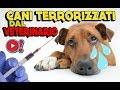 CANI DIVERTENTI TERRORIZZATI DAL VETERINARIO | Videopazzeschi TV