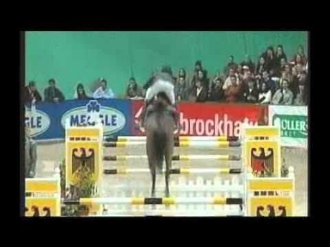 Numero Uno - Elite Stallions