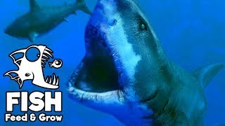 Feed and Grow Fish Gameplay German - Level 300 Great White Shark