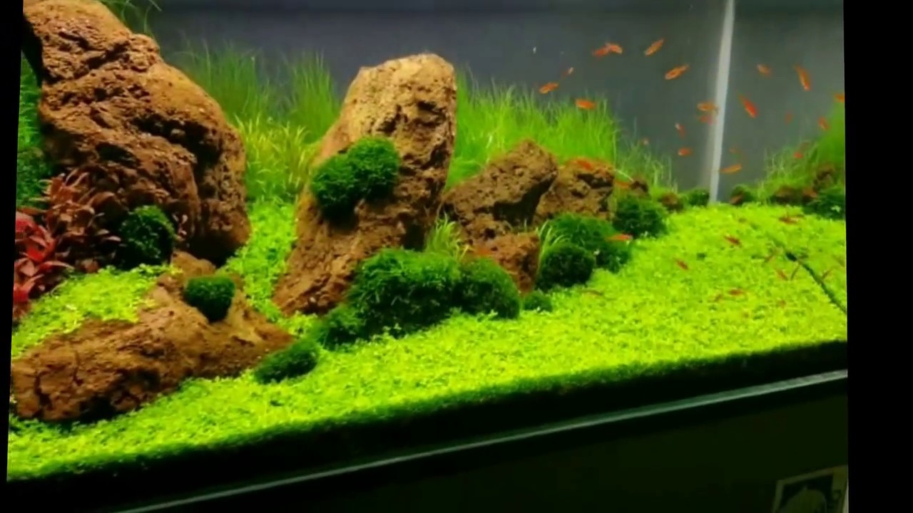 Attractive Aquascape Iwagumi Style 180 Litres