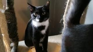 Rescue Kitty Adoptables! - Natasha