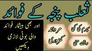 salab panja k fawaid ur us k istemal | jari botion ki pehchan ur un k fawaid [Urdu|Hindi]