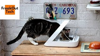 5 Amazing Cat Gadgets You Never Knew About