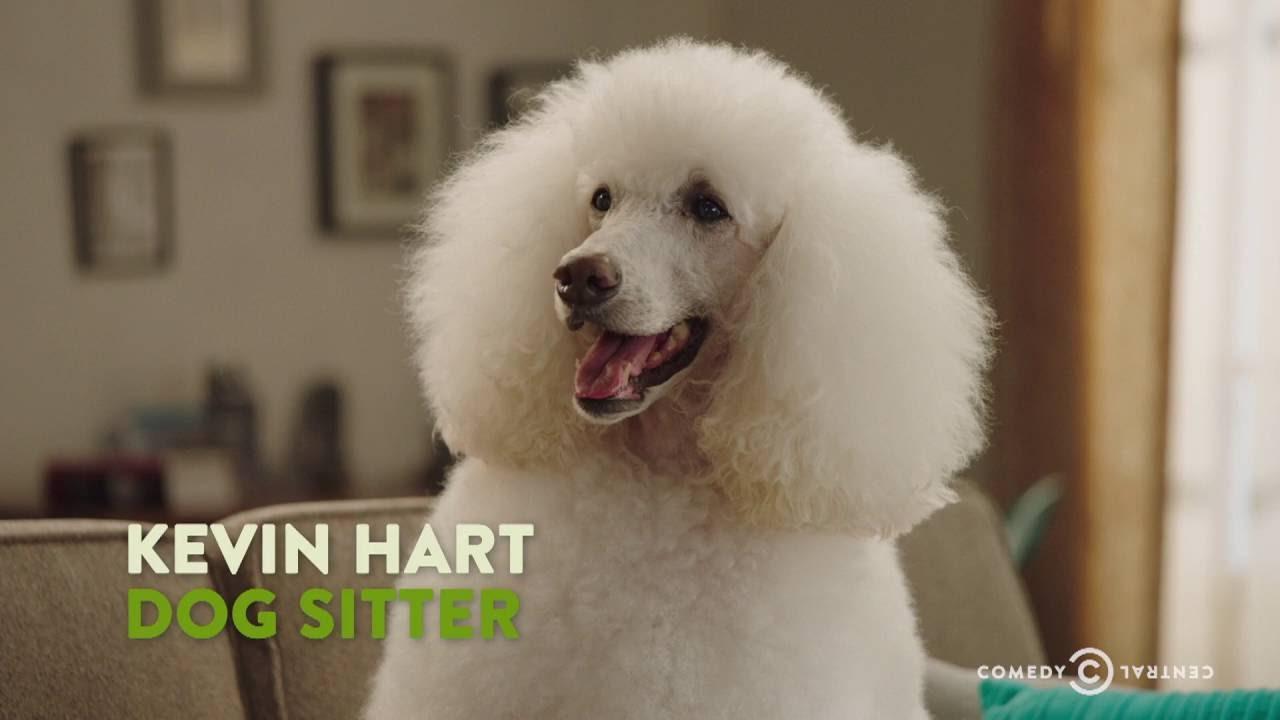 Help Me Kevin Hart Dog