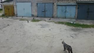 Неудачная охота кошки и погоня на свой район!