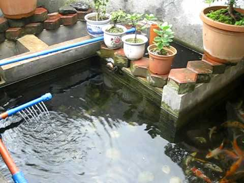 Andre 39 s small koi pond w diy filter youtube for Homemade koi pond filter
