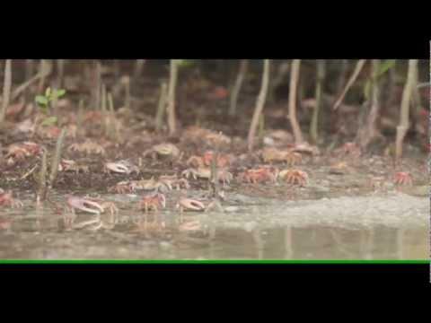 GreenVest On Film - Lawrence Brook