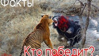 Repeat youtube video Факты про медведя.Кто сильней?