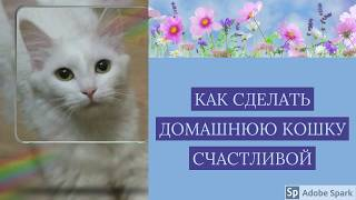 Как сделать домашнюю кошку счастливой/стиль жизни домашних животных.